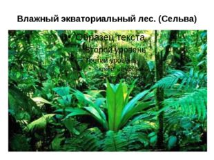 Влажный экваториальный лес. (Сельва)