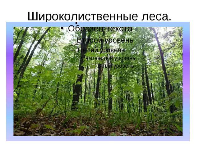 Широколиственные леса.