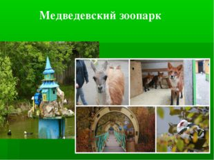 Медведевский зоопарк