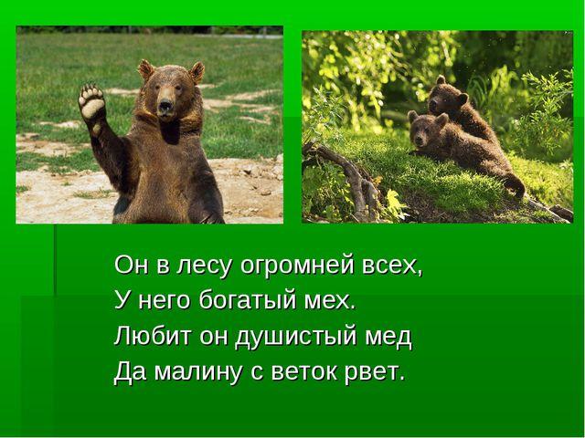 Он в лесу огромней всех, У него богатый мех. Любит он душистый мед Да малину...