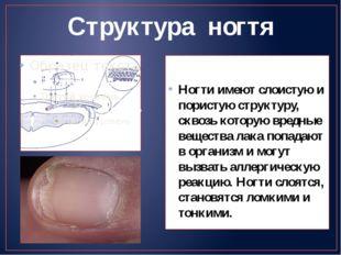 Структура ногтя Ногти имеют слоистую и пористую структуру, сквозь которую вре