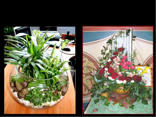 Растения не только очищают воздух в помещении, но украшают жилище человека
