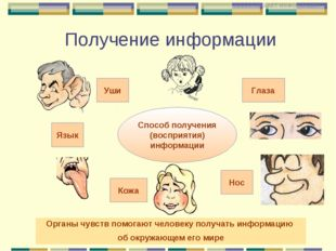 Способ получения (восприятия) информации Уши Кожа Язык Глаза Нос Органы чувст