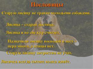 Старую лисицу не травят молодыми собаками. Лисица – старая льстица. Лисица и