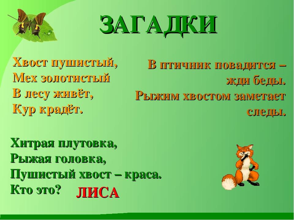 : Хвост пушистый, Мех золотистый В лесу живёт, Кур крадёт. В птичник повадитс...