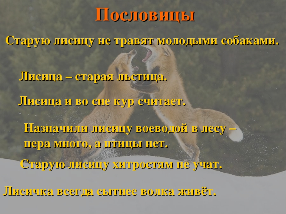 Старую лисицу не травят молодыми собаками. Лисица – старая льстица. Лисица и...