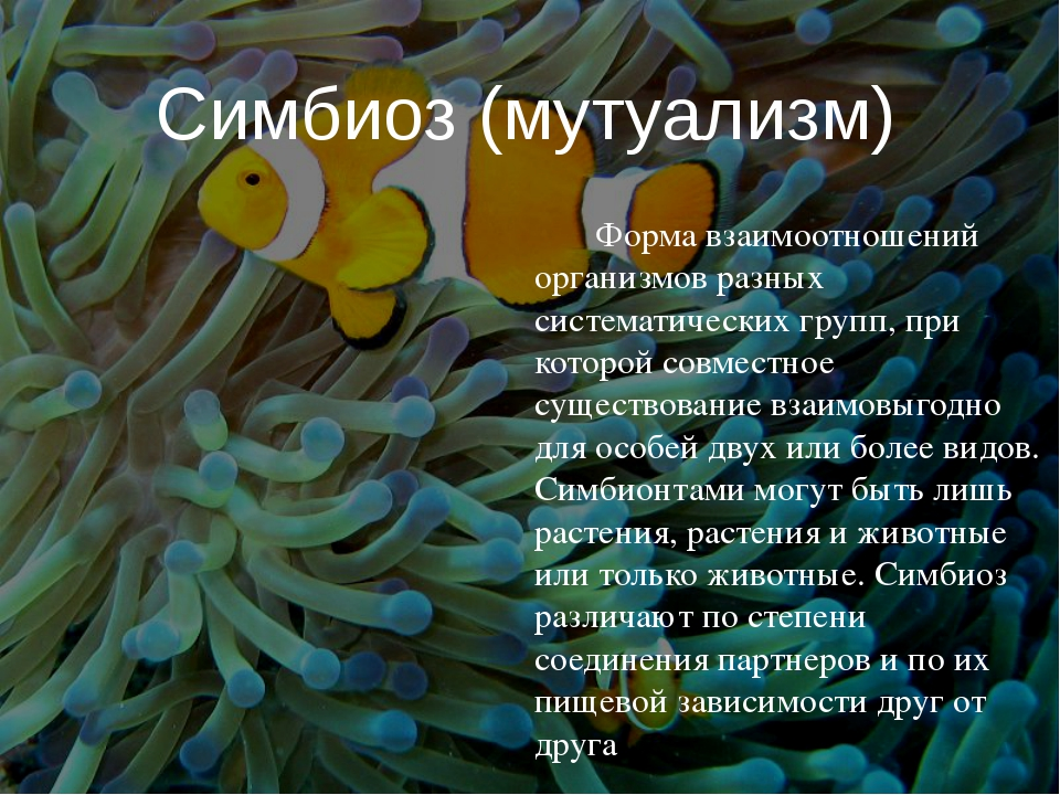 Форма взаимоотношений организмов разных систематических групп, при которой со...