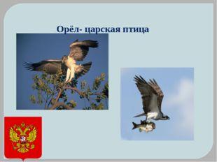. Орёл- царская птица