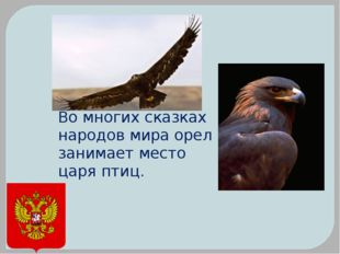 Во многих сказках народов мира орел занимает место царя птиц.