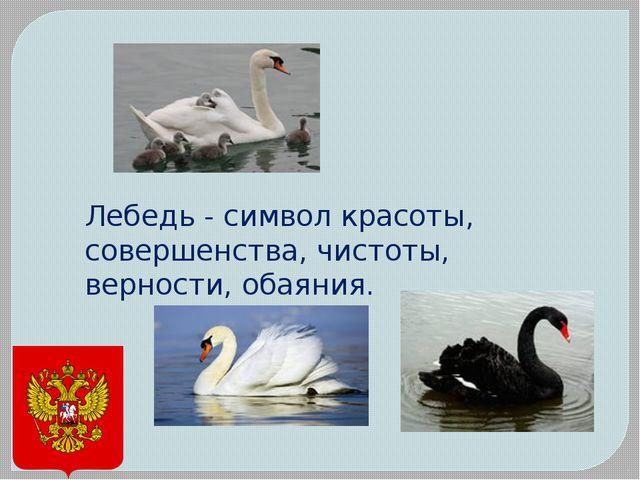 Лебедь - символ красоты, совершенства, чистоты, верности, обаяния.