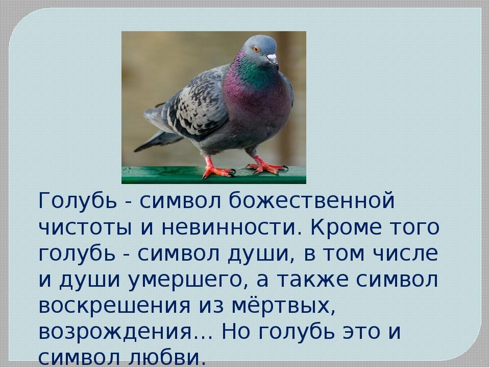 Голубь - символ божественной чистоты и невинности. Кроме того голубь - символ...