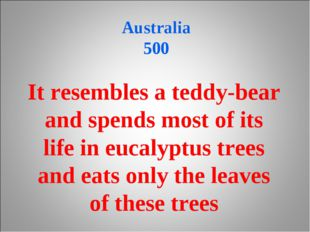 Australia 500 It resembles a teddy-bear and spends most of its life in eucal