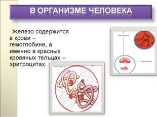 Железо содержится в крови – гемоглобине, а именно в красных кровяных тельцах