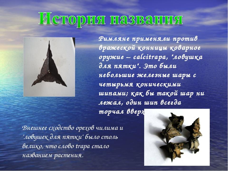 """Римляне применяли против вражеской конницы коварное оружие – calcitrapa, """"лов..."""
