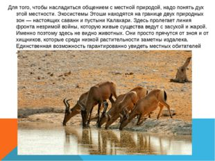 Для того, чтобы насладиться общением с местной природой, надо понять дух этой