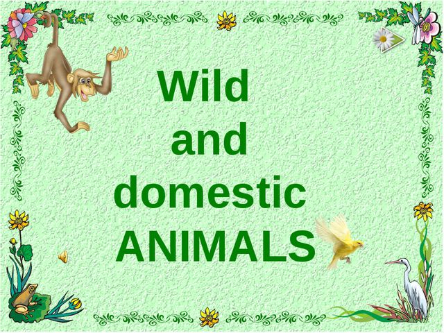 Wild and domestic ANIMALS