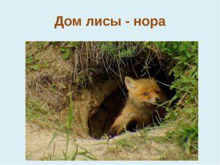 Дом лисы - нора