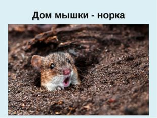 Дом мышки - норка