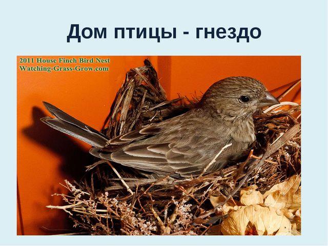Дом птицы - гнездо