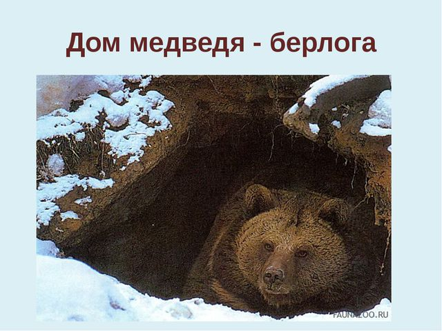 Дом медведя - берлога