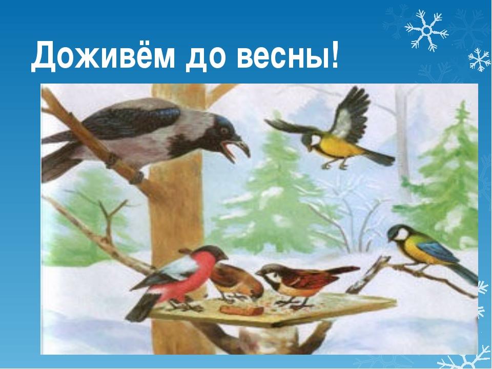 Доживём до весны!