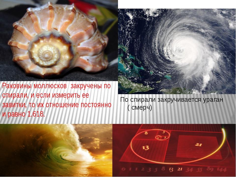 Раковины моллюсков закручены по спирали, и если измерить ее завитки, то их о...