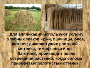 Для аппликации используют солому хлебных злаков - ржи, пшеницы, овса, ячменя