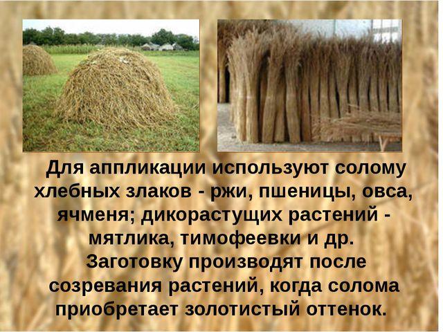 Для аппликации используют солому хлебных злаков - ржи, пшеницы, овса, ячменя...