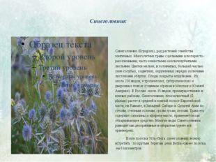 Синеголовник Синеголовник (Eryngium), род растений семейства зонтичных. Мног