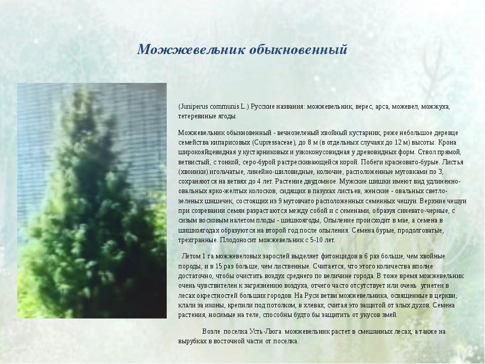 Можжевельник обыкновенный (Juniperus communis L.) Русские названия: можжевел...