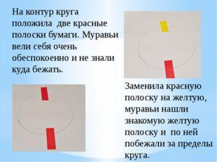 На контур круга положила две красные полоски бумаги. Муравьи вели себя очень