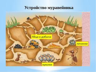 Устройство муравейника