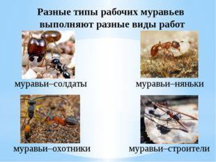 Разные типы рабочих муравьев выполняют разные виды работ муравьи–солдаты мура