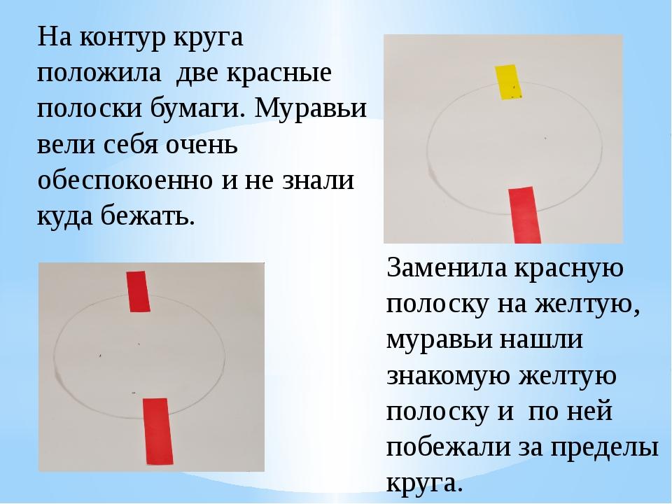 На контур круга положила две красные полоски бумаги. Муравьи вели себя очень...