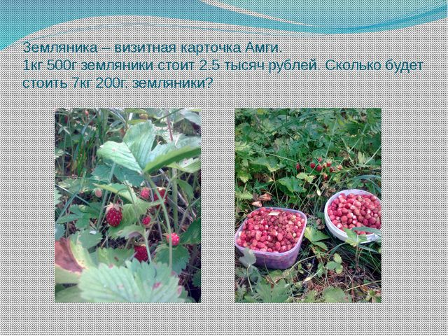 Земляника – визитная карточка Амги. 1кг 500г земляники стоит 2.5 тысяч рублей...
