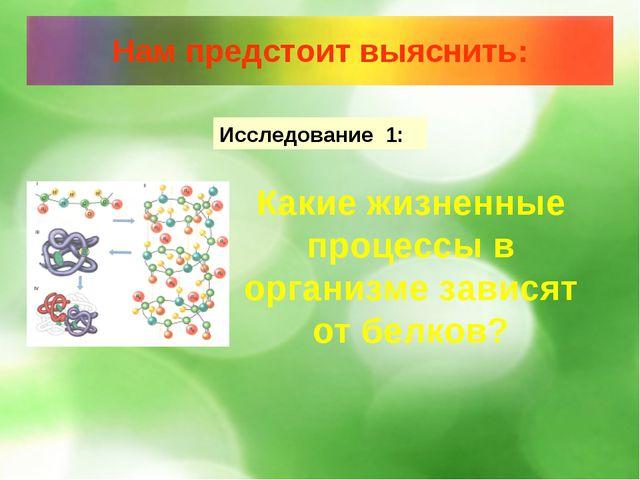 Исследование 1: Какие жизненные процессы в организме зависят от белков?