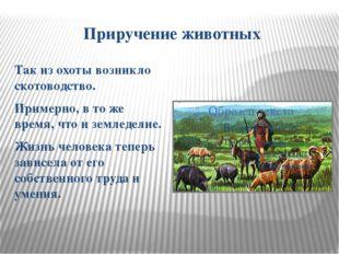 Приручение животных Так из охоты возникло скотоводство. Примерно, в то же вре