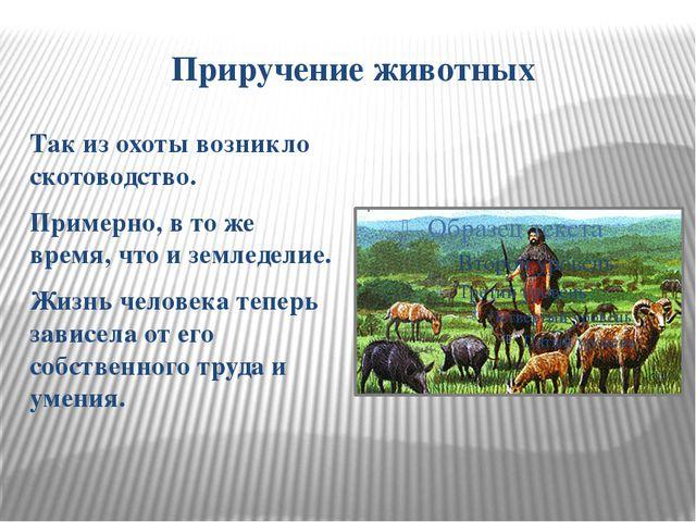 Приручение животных Так из охоты возникло скотоводство. Примерно, в то же вре...