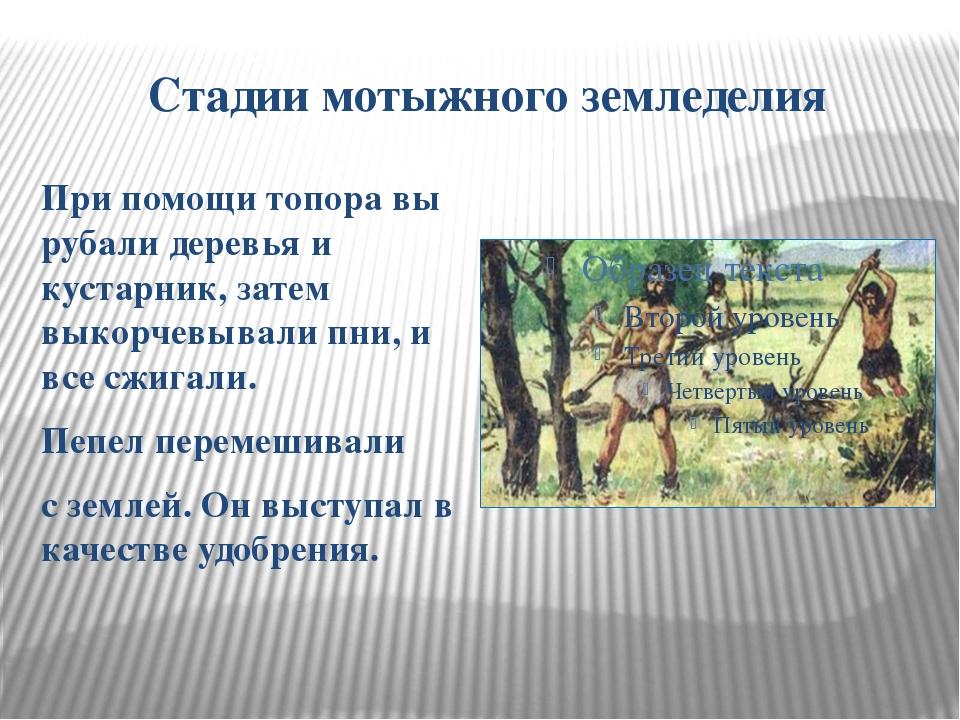 Стадии мотыжного земледелия При помощи топора вы рубали деревья и кустарник,...