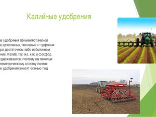 Калийные удобрения Калийные удобрения применяют весной только на супесчаных,