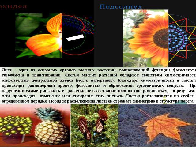 Лист - один из основных органов высших растений, выполняющий функции фотосинт...