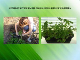 Зеленые витамины на подоконнике класса биологии.