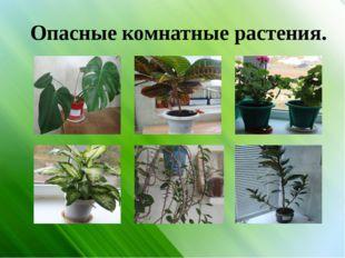 Опасные комнатные растения.