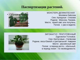 Паспортизация растений. МОНСТЕРА ДЕЛИКАТЕСНАЯ Monstera Deliciosa Сем. Ароидны