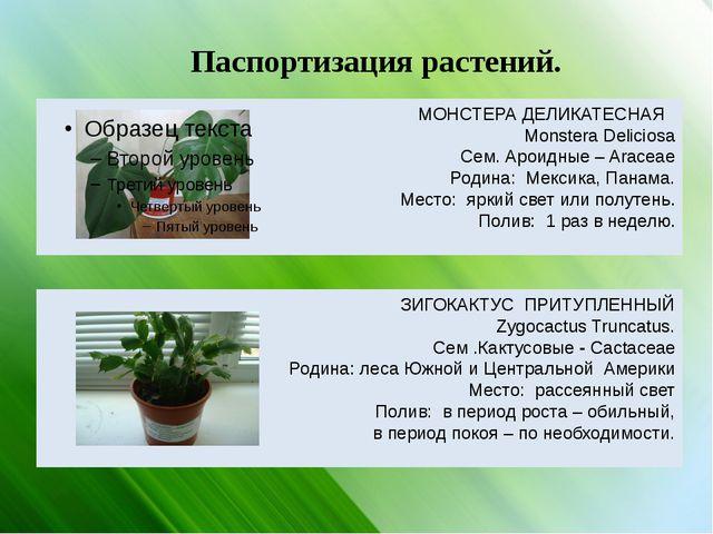 Паспортизация растений. МОНСТЕРА ДЕЛИКАТЕСНАЯ Monstera Deliciosa Сем. Ароидны...
