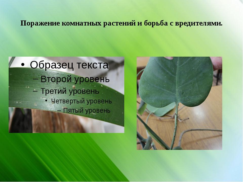 Поражение комнатных растений и борьба с вредителями.