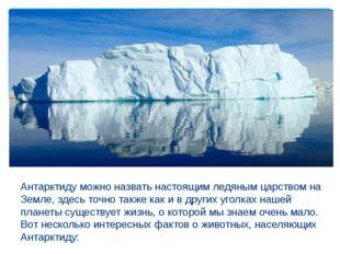 Антарктиду можно назвать настоящим ледяным царством на Земле, здесь точно та