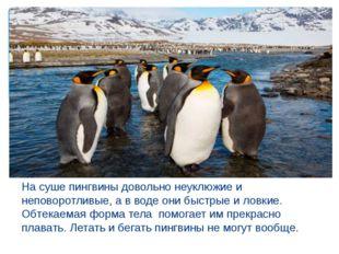На суше пингвины довольно неуклюжие и неповоротливые, а в воде они быстрые и