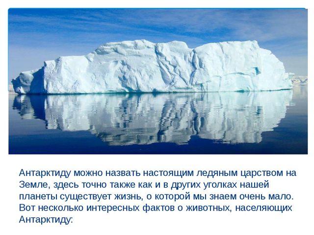 Антарктиду можно назвать настоящим ледяным царством на Земле, здесь точно та...