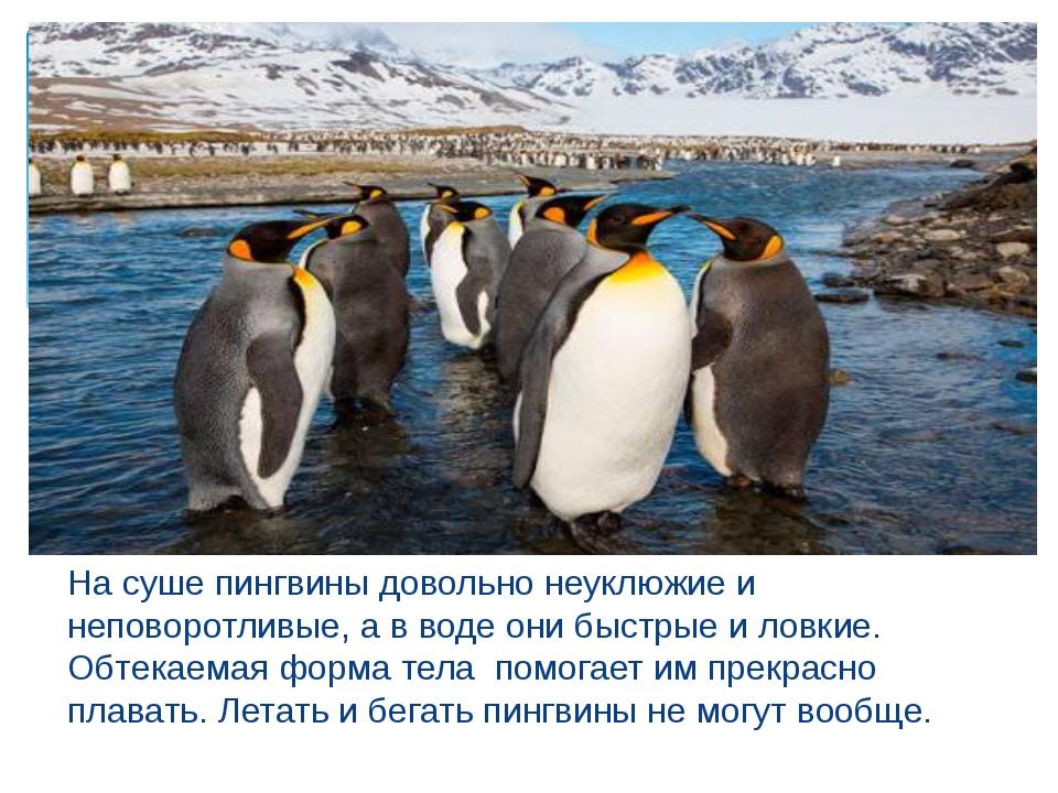 На суше пингвины довольно неуклюжие и неповоротливые, а в воде они быстрые и...